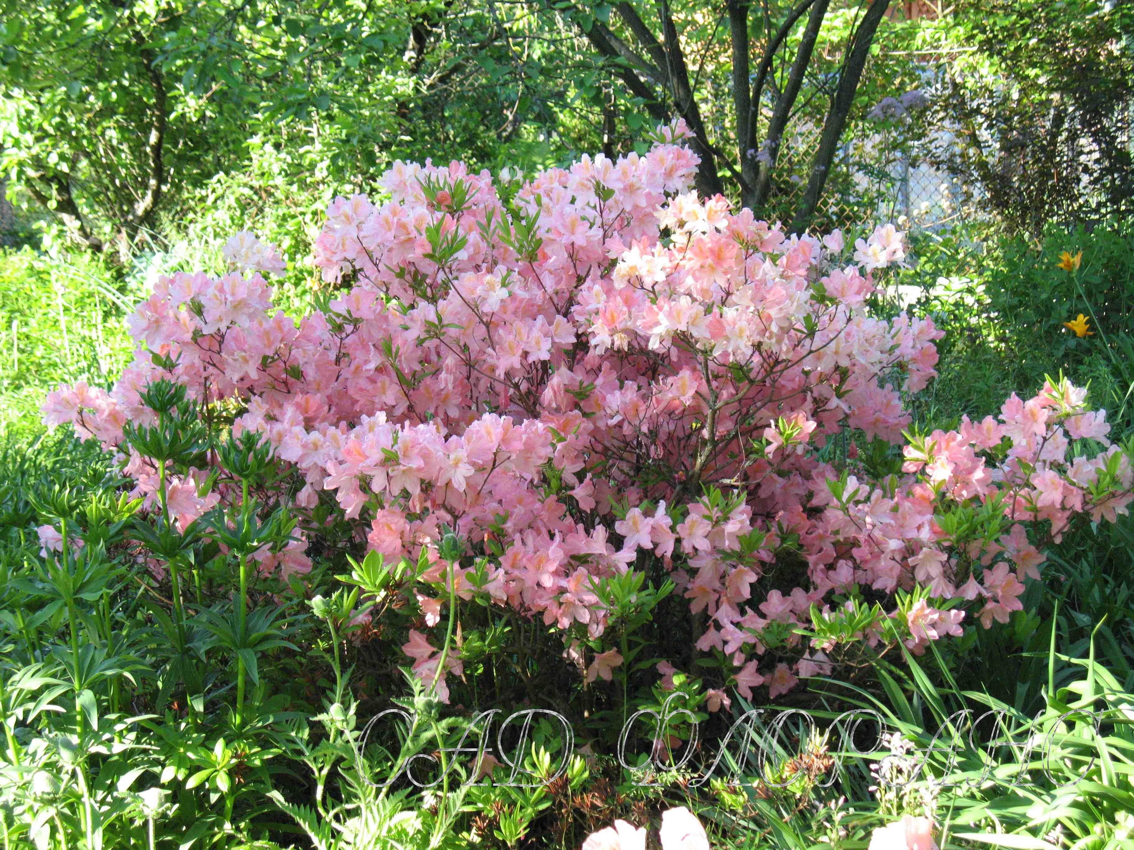Сад флоранс колоколенковы просмотров