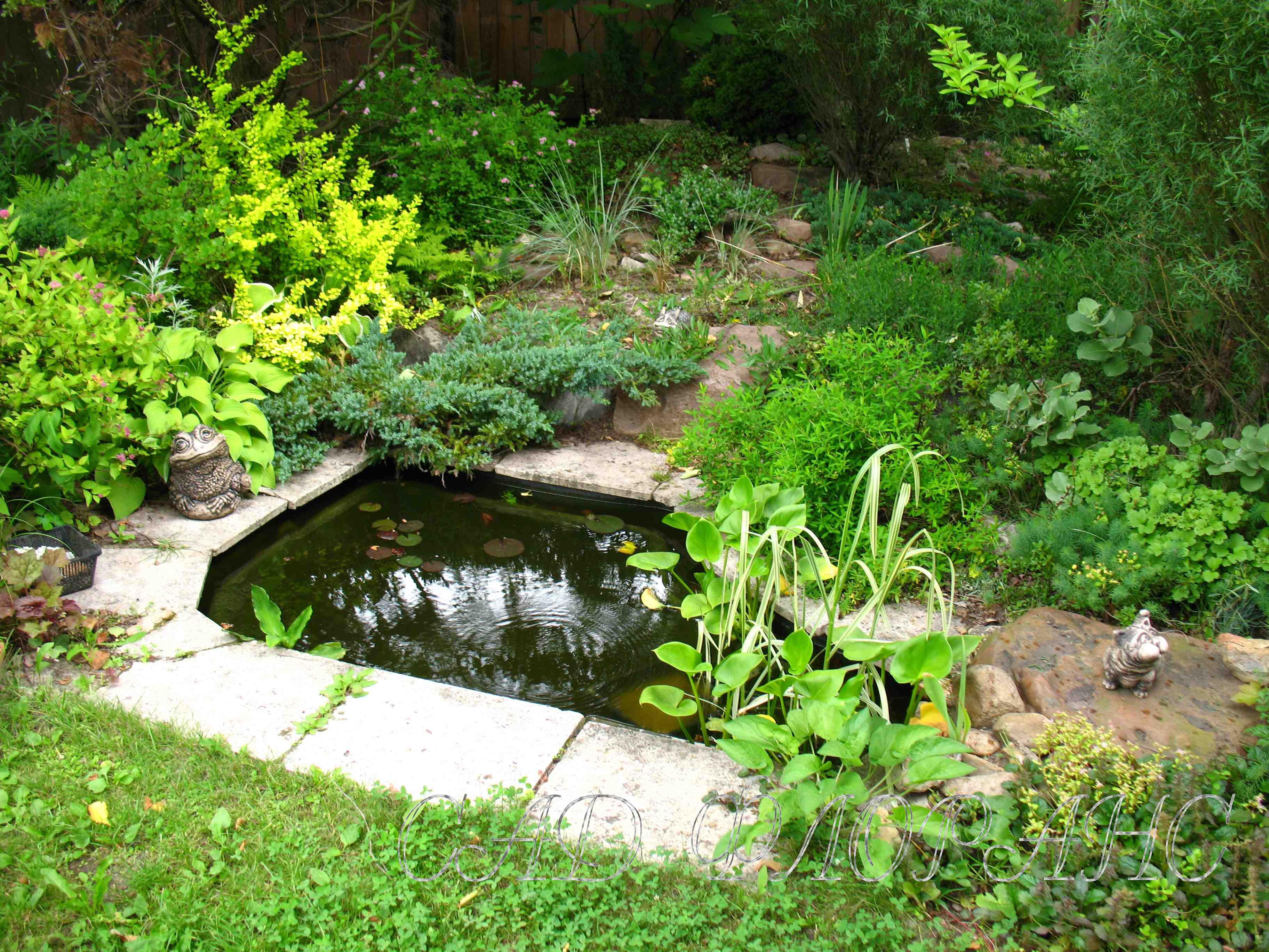 Сад флоранс о себе и саде история
